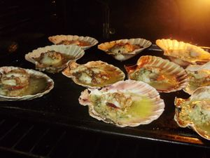 Coquille Saint Jacques 1600.JPG