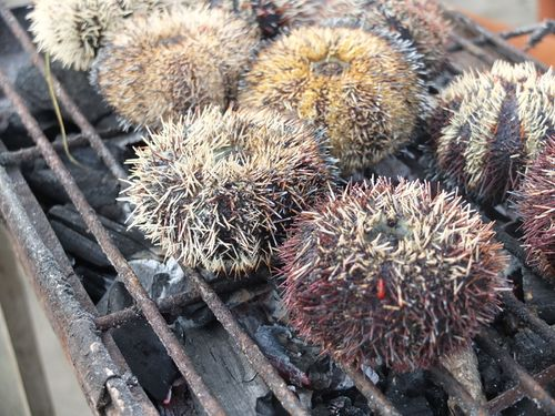 Sea urchins grilling philippines 1600 faa18062016.jpg